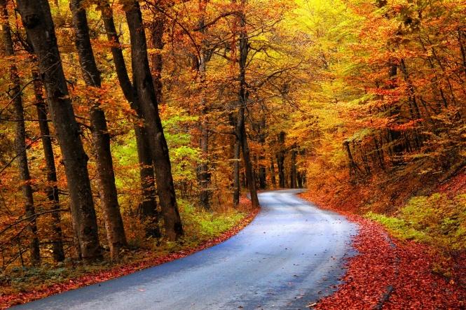 Exemple de route en automne